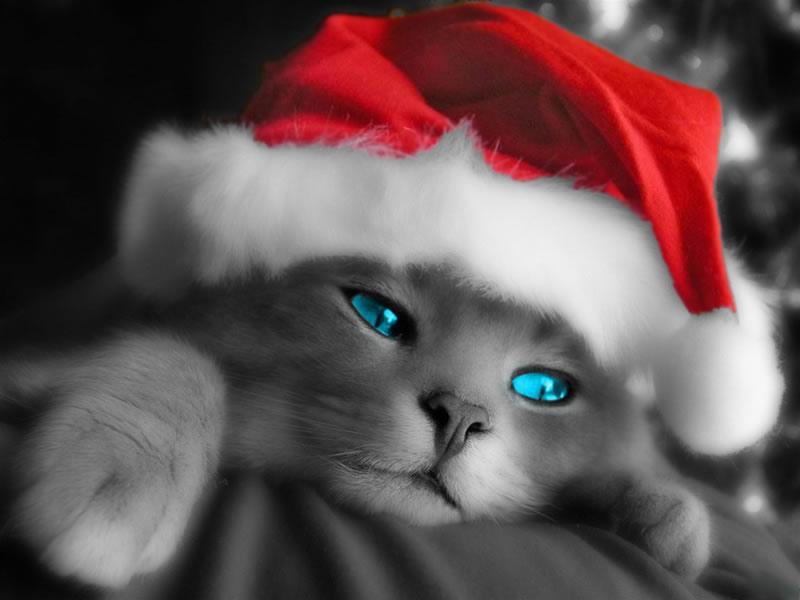de nuria d u publicado en fondos y postales de navidad