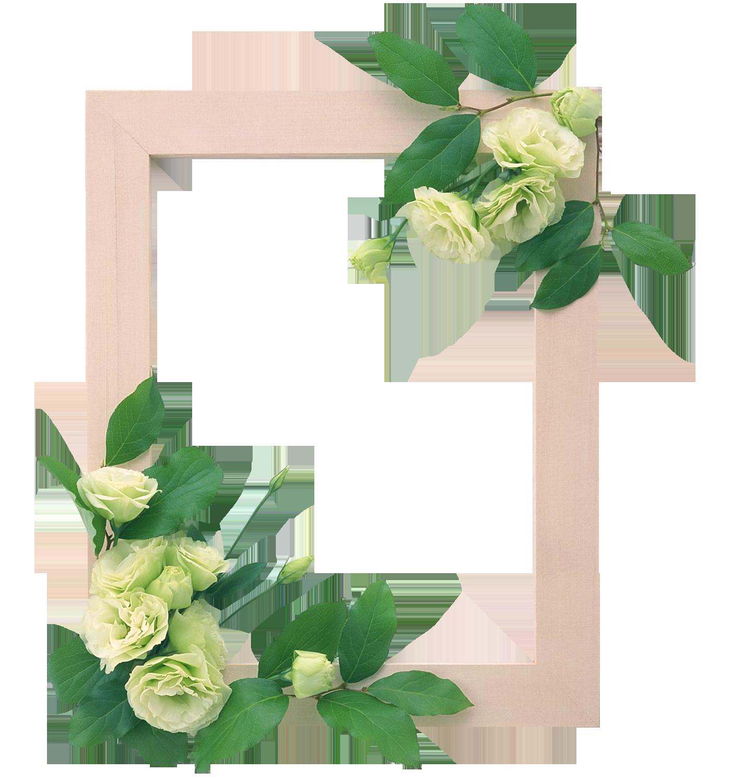 Marcos para fotos con flores marcos para fotos con - Imagenes de plantas de interior ...