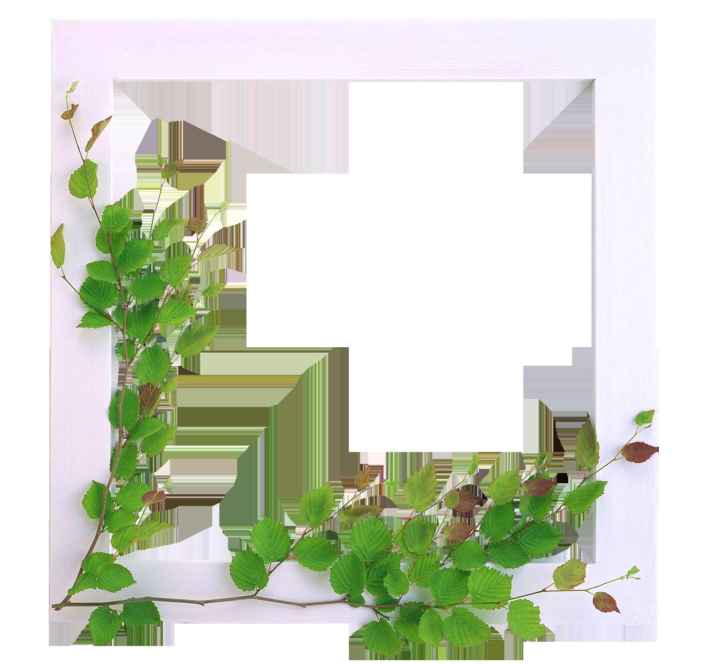 Marcos para fotos con flores fondos de pantalla y mucho m s - Marcos para plantas ...