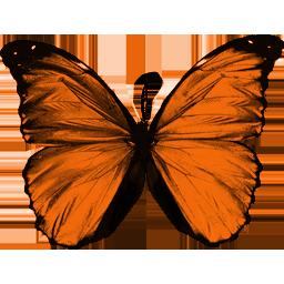 Gifs de Mariposas de colores  Fondos de pantalla y mucho ms