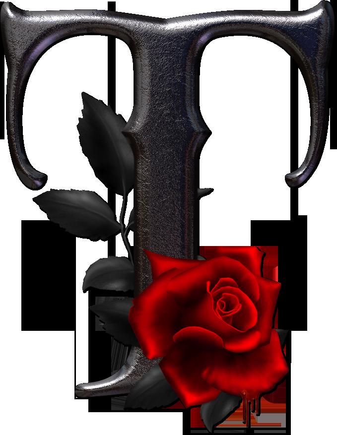 rosas rojas con letras submited images