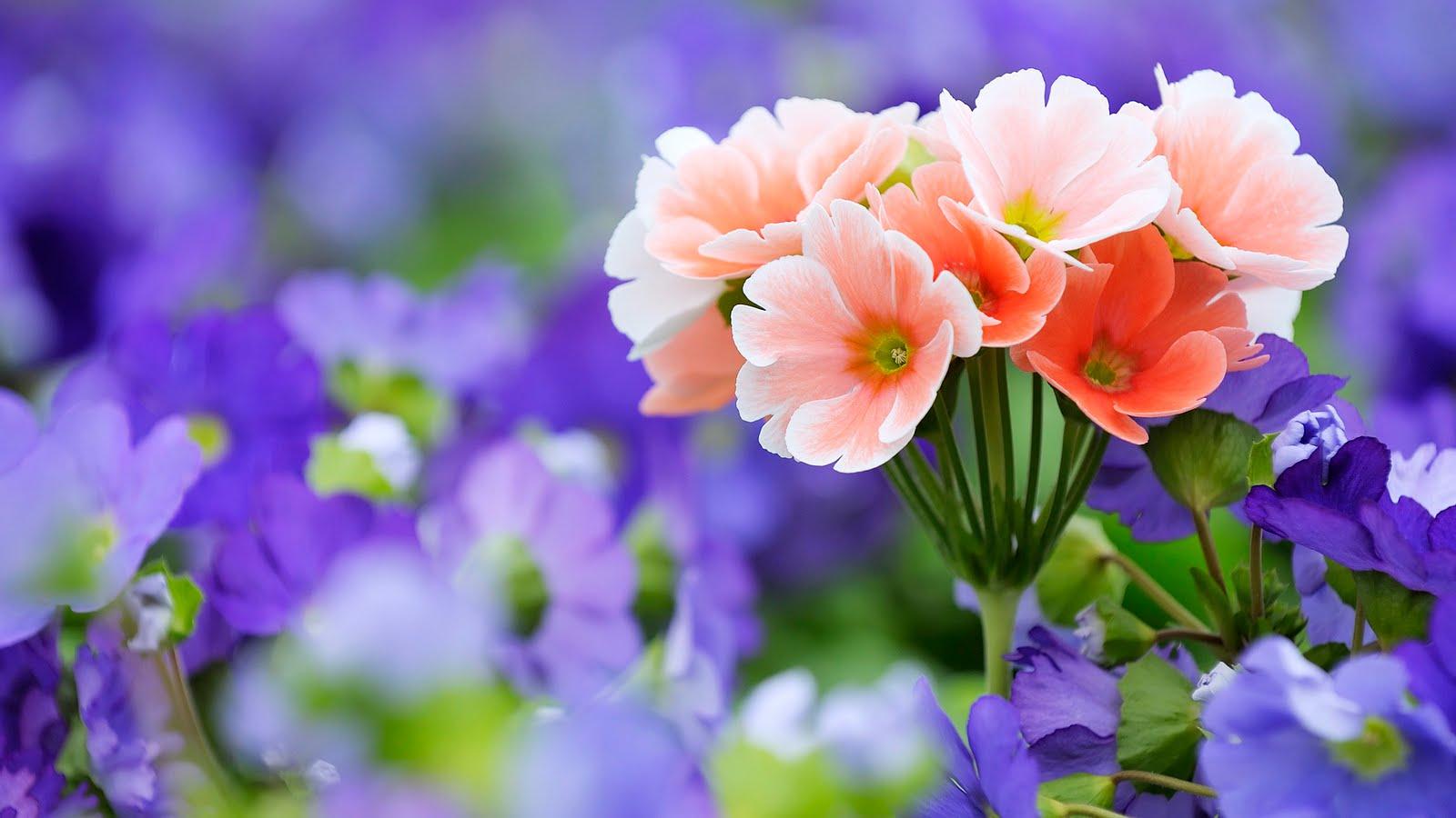 [Imagen: flores2by2bflowers2bby2bwww-bancodeimage...-com-1.jpg]