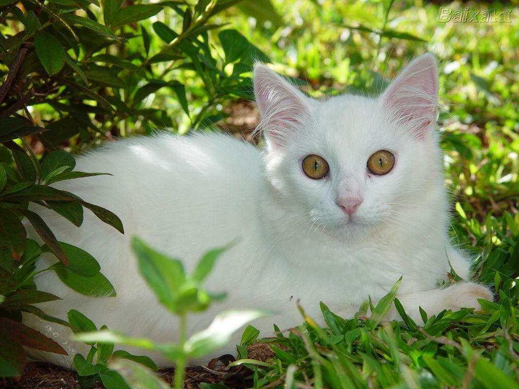 Dibujos Animados Animales Lindo Mar Fondo De Pantalla De: Fondos De Pantalla De Animales – Gatos