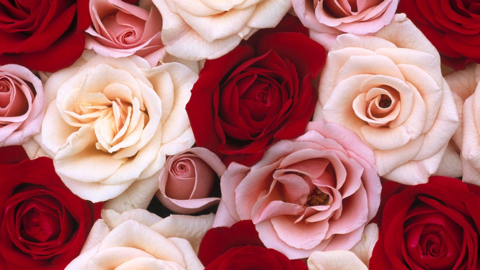 Fondos De Pantalla De Flores Hd Fondos De Pantalla Y Mucho Mas