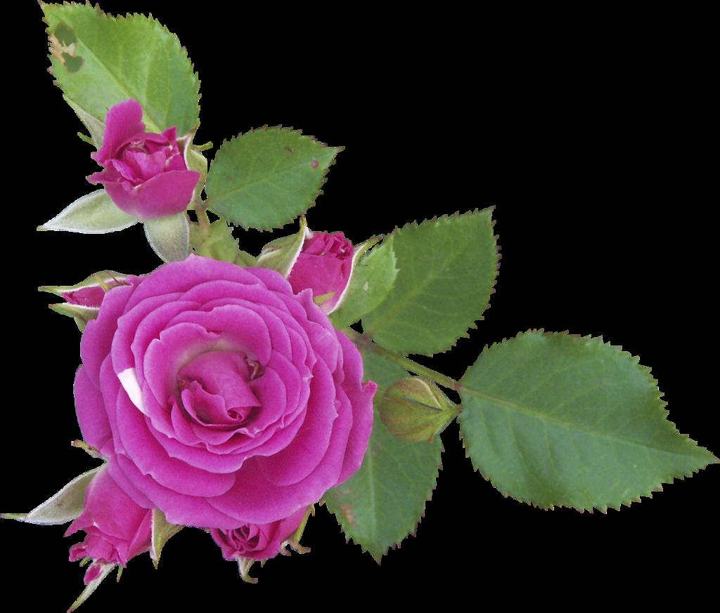 Gifs De Flores Fondos De Pantalla Y Mucho Mas
