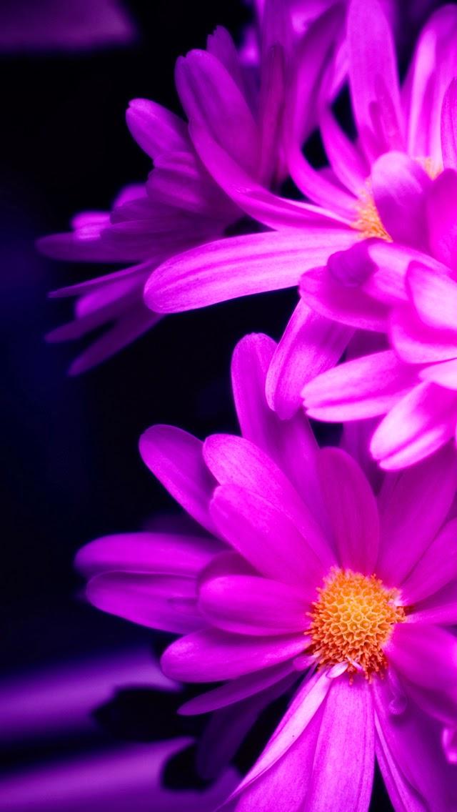 Fondos Para Iphone De Flores Fondos De Pantalla Y Mucho Mas