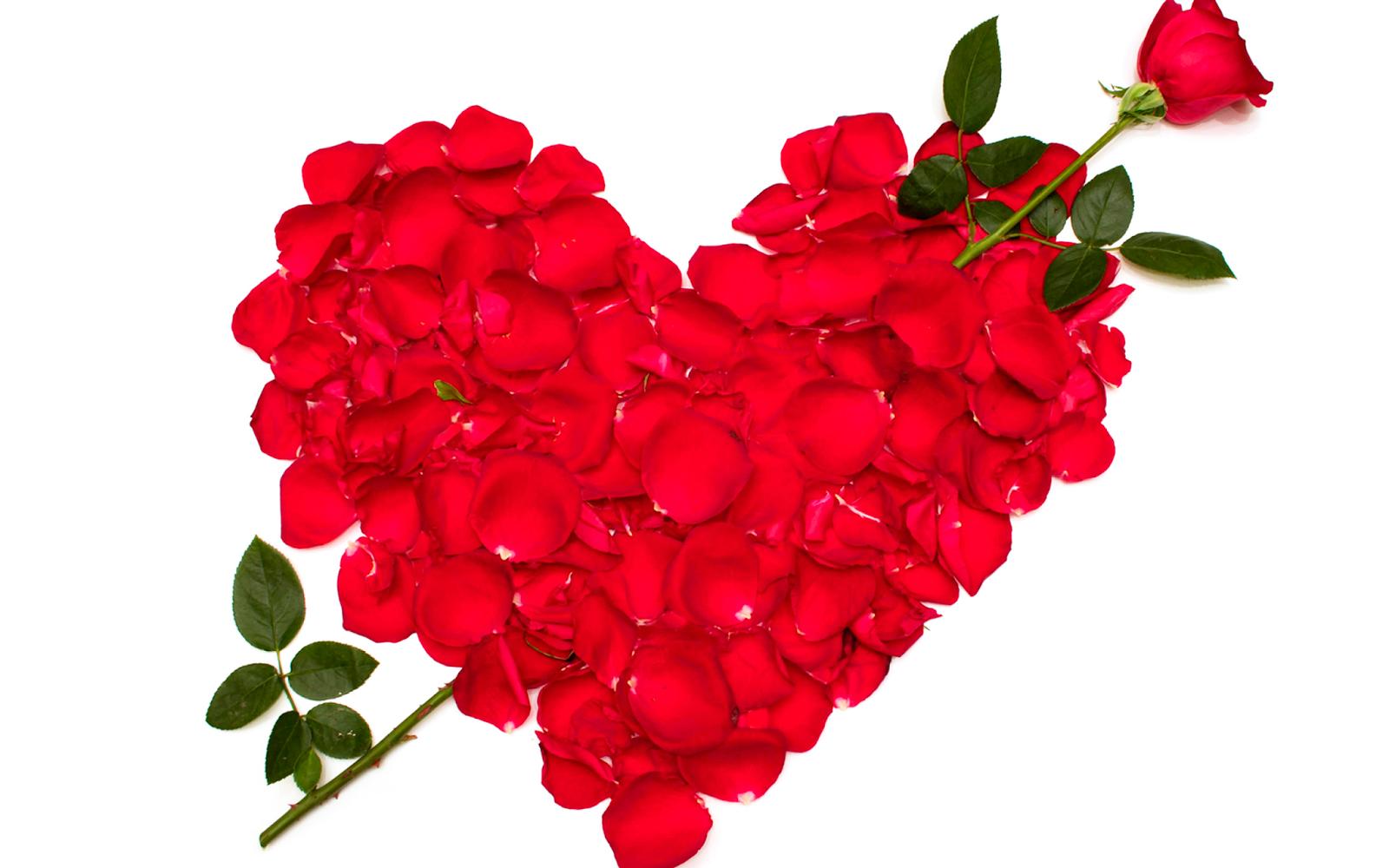 Fondos De Pantalla Animados De San Valentín: Fondos De Pantalla Y Mucho Más