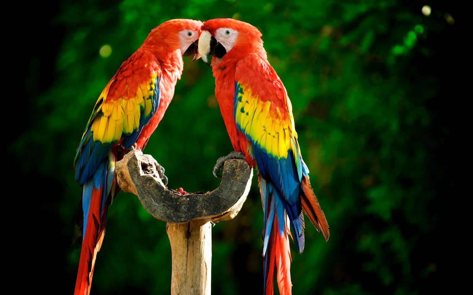 Wallpaper Gallery Love Bird Wallpaper: Fondos De Pantalla Y Mucho Más
