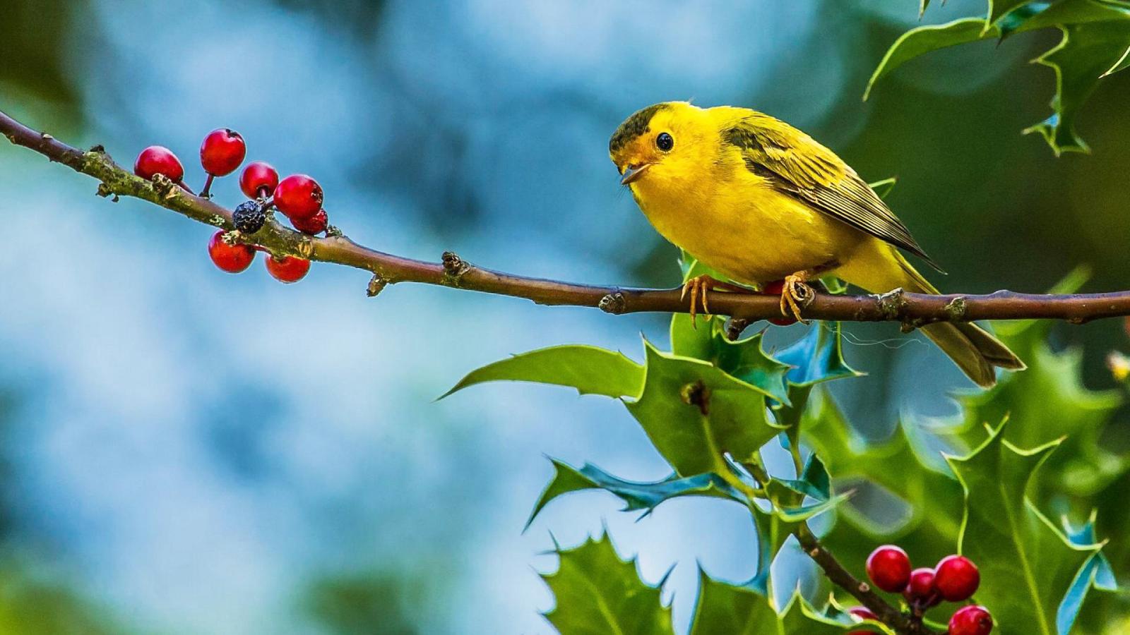 Fondos De Pantayas: Fondos De Pantalla De Pájaros