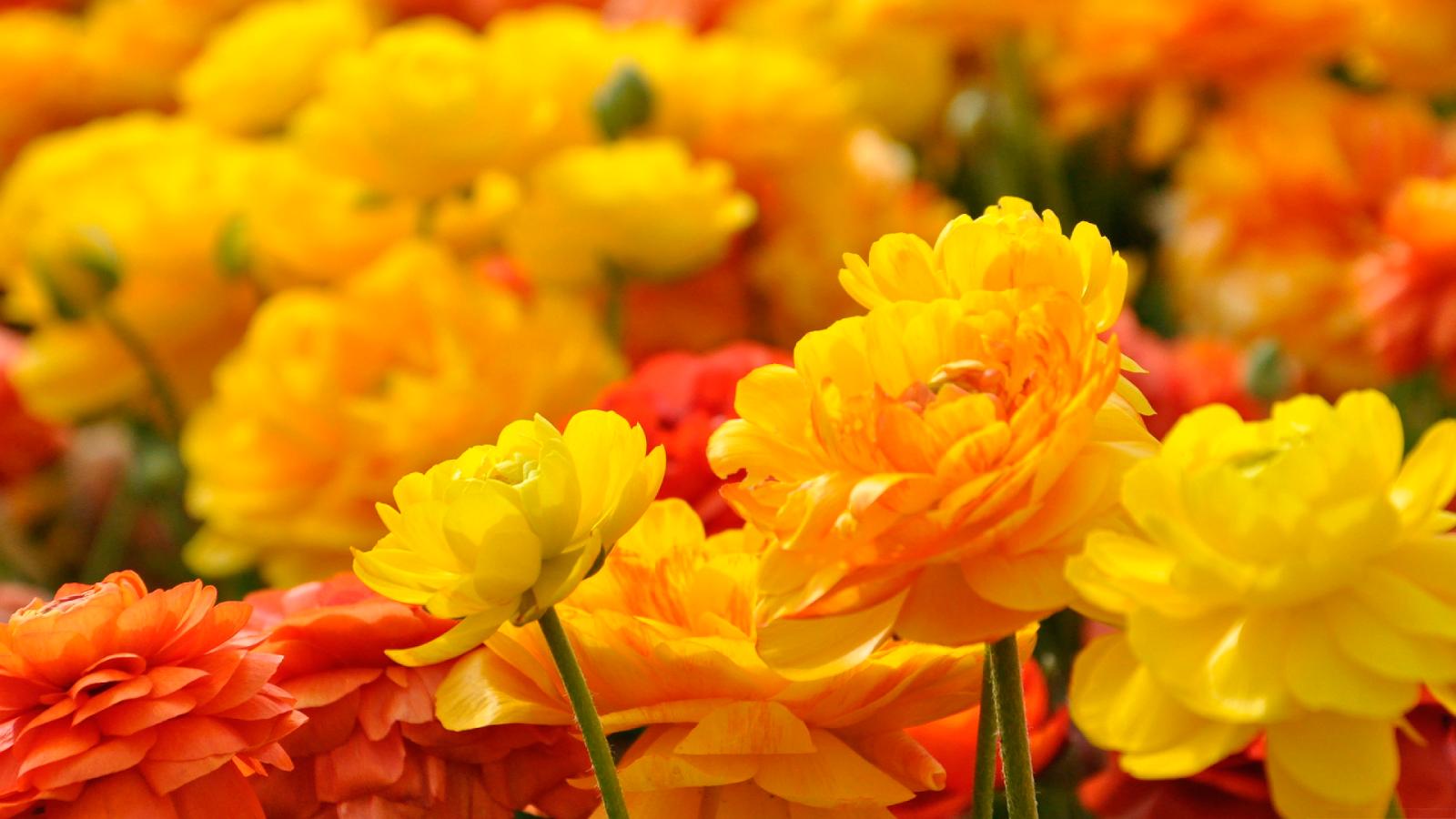 Imagenes De Flores Fondos De Pantalla Y Mucho Mas