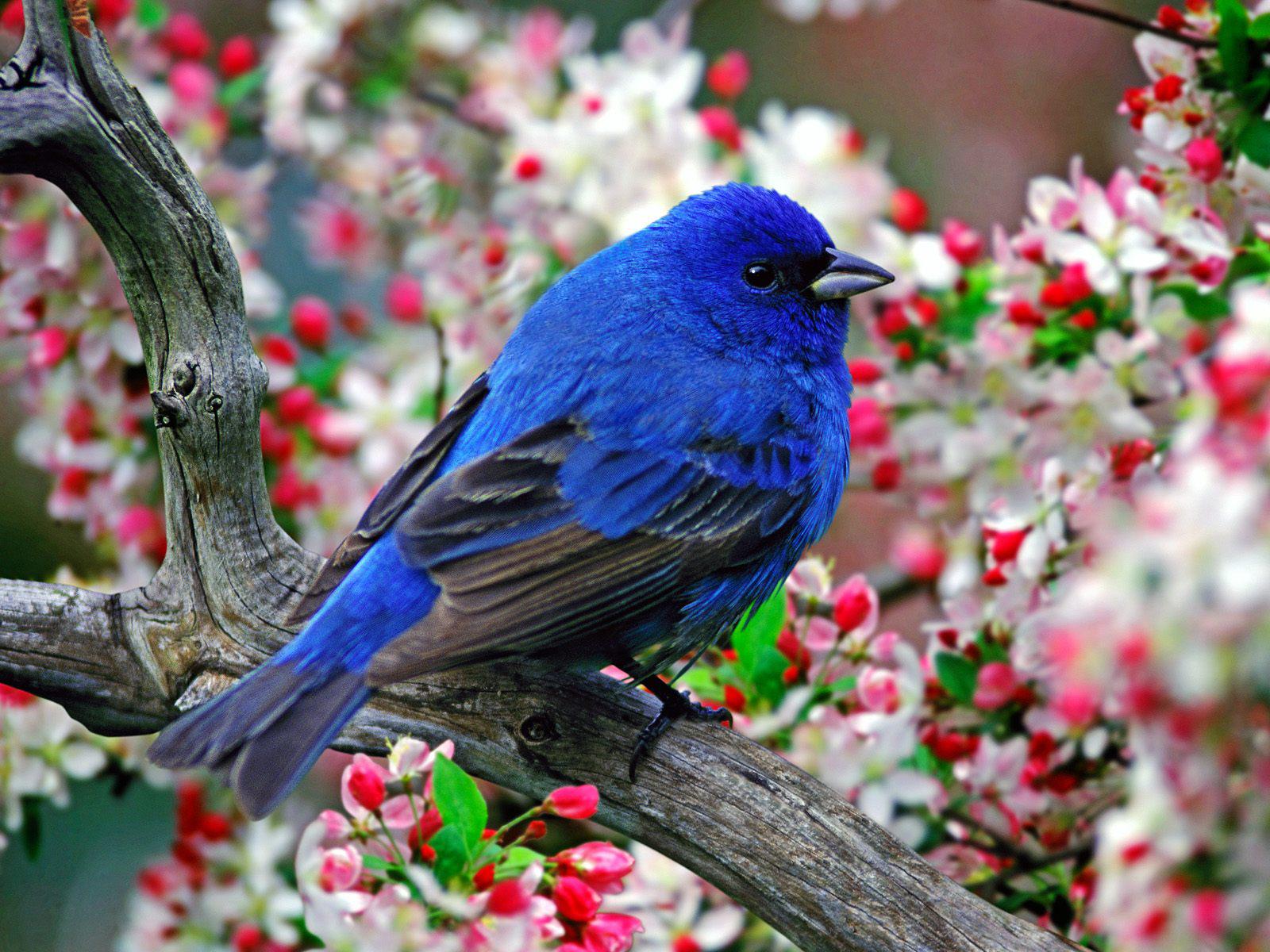 Fondos De Pantalla De Quikis: Fondos De Pantalla De Pájaros