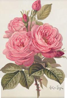 art nouveau flowers wallpaper