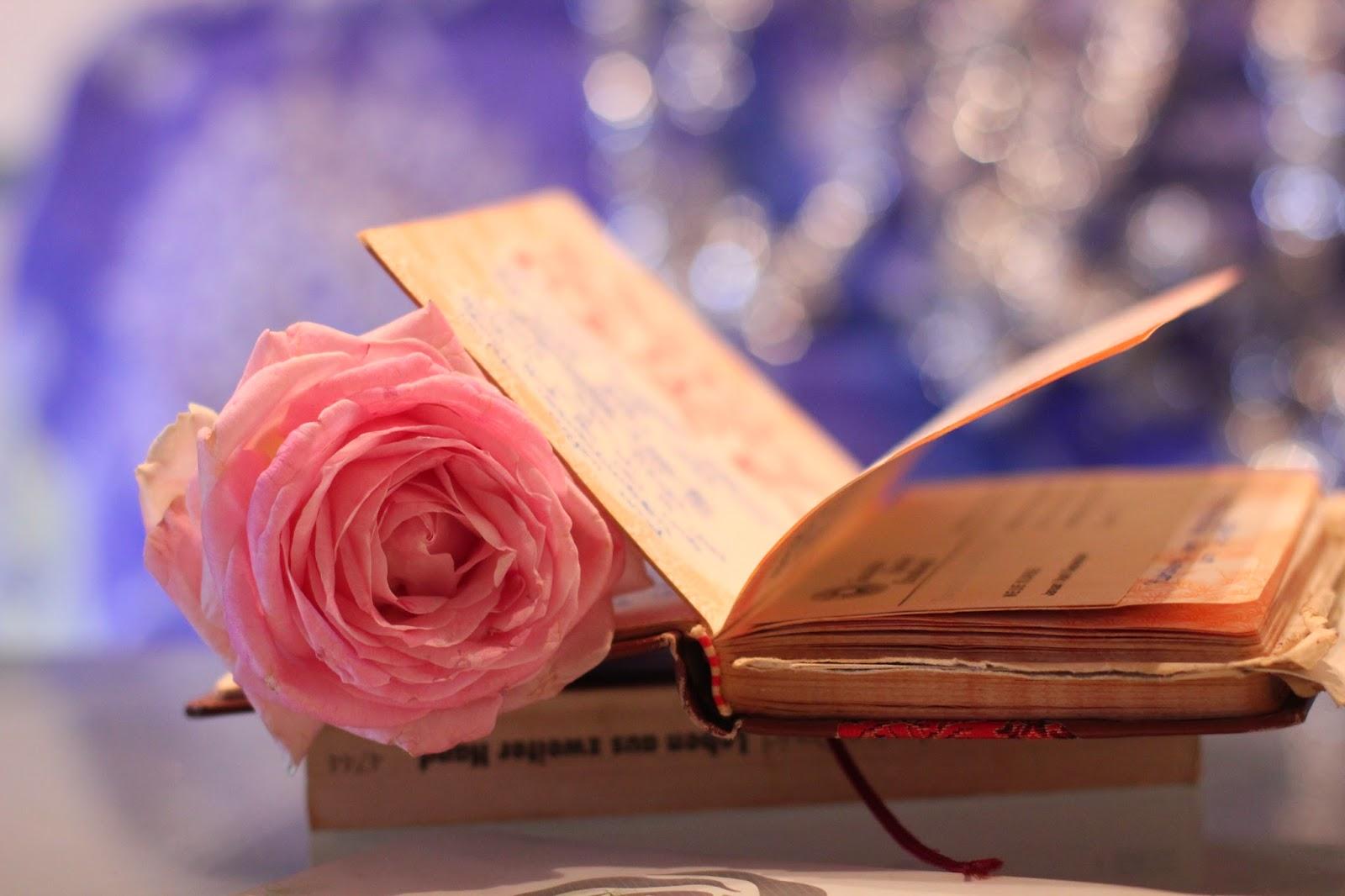 Fondos De Pantalla De Rosas Y Libros